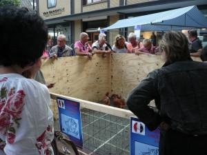 Ludieke loterij: waar schijt de kip op 1 september in Putten